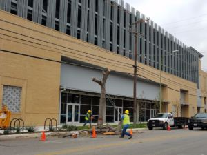 Downtown Tree removal. Two workers, one sawing into tree and the other stabilizing with rope next to Tobin Center Garage.
