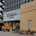 Tree worker cutting tree up next to Tobin Garage.